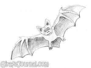 как рисовать летучую мышь картинки