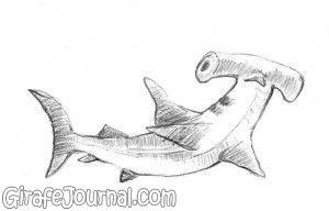 Как нарисовать акулу-молот?