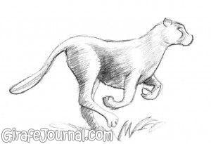 Как нарисовать гепарда?