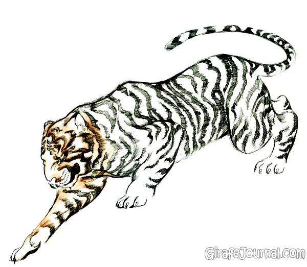 Картинки нарисованные тигры поэтапно