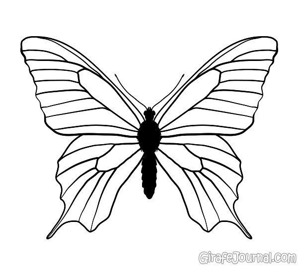 Как нарисовать бабочку поэтапно?