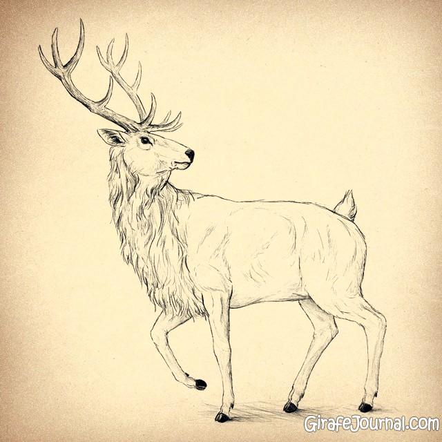 рисунок оленя карандашом: