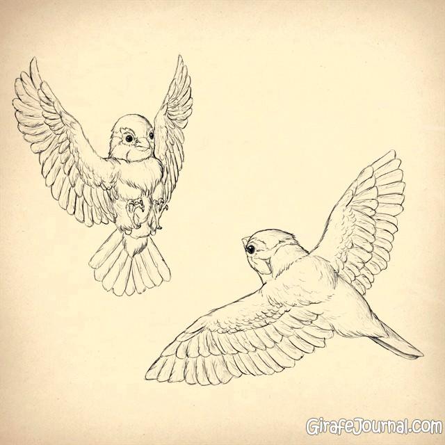 Как нарисовать птиц?