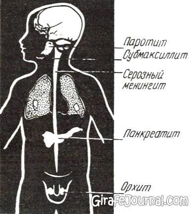 Среднее ухо болезни симптомы и лечение
