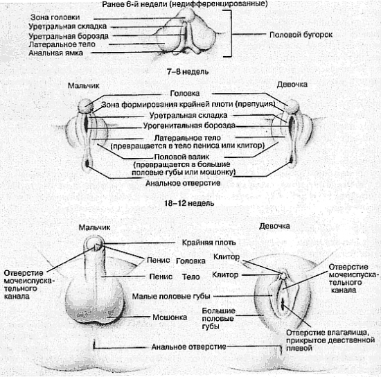 razmeri-vlagalisha-lebedushka