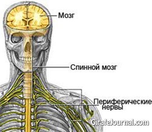 Чем лечить нервную систему? фото