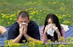 Как лечить аллергию на цветение? фото